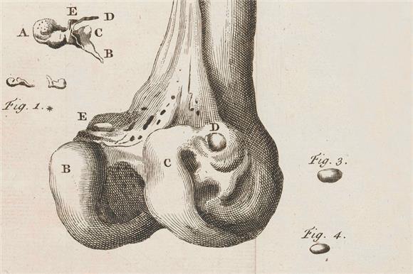 ВЦИОМ: 25% населения донорство костного мозга пугает, 61% никогда о нем не слышали